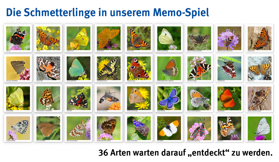 Spielen Schmetterlinge
